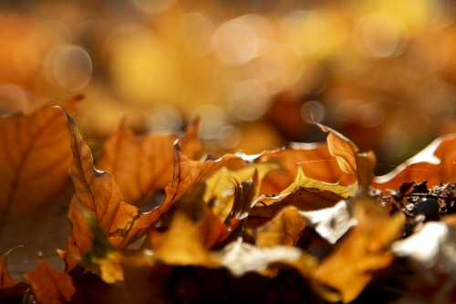 autumn forest leaves