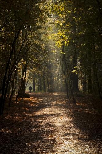 forest light morning trees