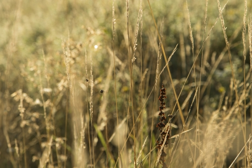 grass sun sunrise morning fields